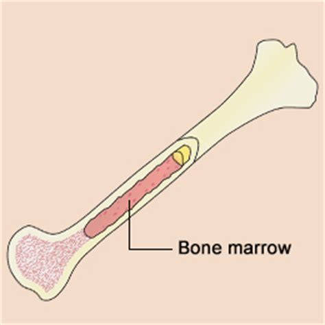 what is bone & bone marrow homeopathic used picture 2