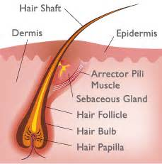 hair grows on shaft of penis pics picture 19