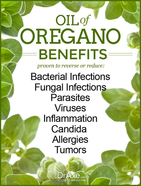 can taking oil of oregano help with epididymitis picture 11