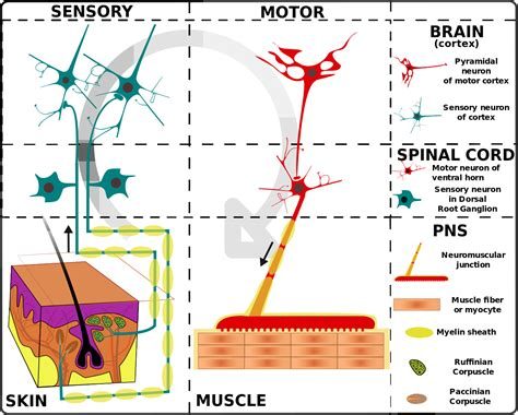 structure of skin modules picture 11