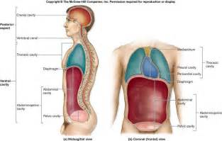 gall bladder pain picture 17