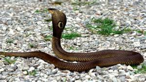 actual pictures of snakes h picture 13