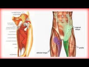 groin muscle detox picture 1