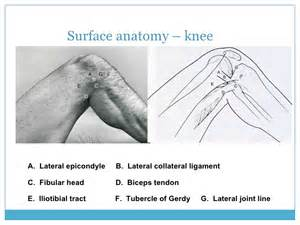 anatomy of knee joint picture 2