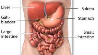 where is the liver located in the body picture 7
