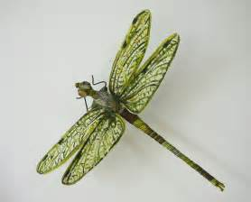 biddy dragonfly diet picture 2