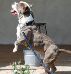 dehydrated and muscle problems in dogs picture 10
