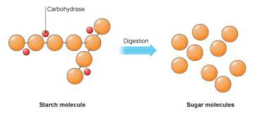 how does enzymes help digestion picture 5