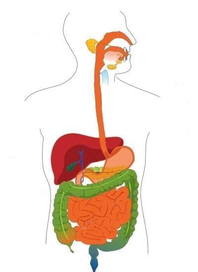colon c keanse picture 7