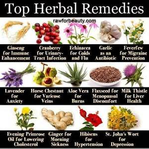what is the herbal medicine for almoranas picture 6