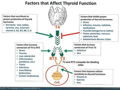 how does taking a thyroid pill affect tsh levels picture 3