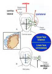 effect of inner g capsule picture 18