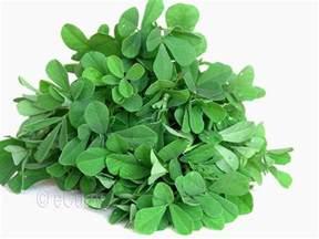 fenugreek leaves picture 1