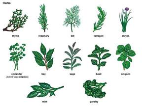 legal natural herb or plant that works like picture 16