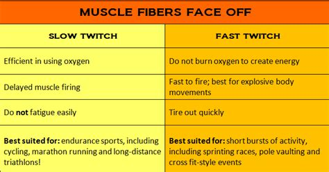 fast twitch and slow muscle fibers picture 1