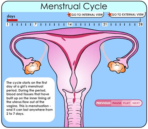 accummulated blood in uterus picture 1