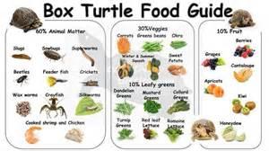 box turtles diet picture 2