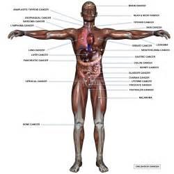 anatomy gall bladder picture 14