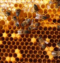 Honey comb bee hive picture 1