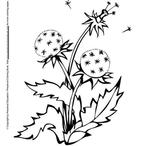 dandelion coloring picture 15