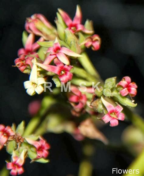 herbal treatment for genital warts in sri lanka picture 14