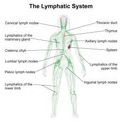 full body fat tissue lymphatic cleanse picture 2