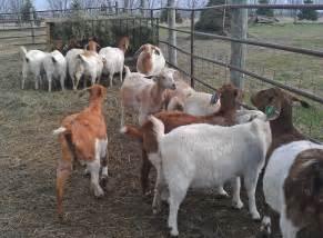 deer farm in pakistan picture 6