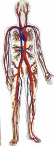 blood and circulation picture 18
