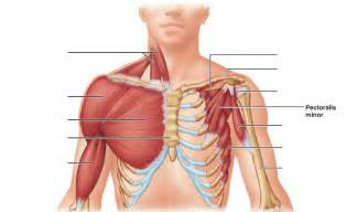 chest muscle spasms picture 18