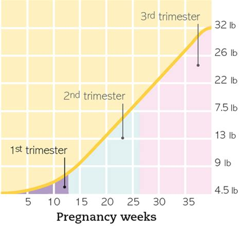 weight gain during your first trimester picture 1