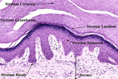 thicken skin picture 9