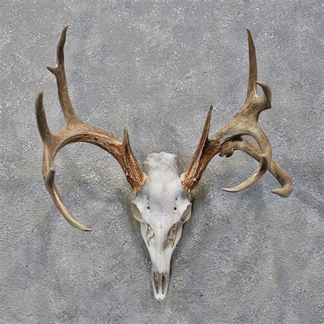 deer skull and h picture 10