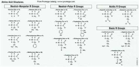 natural amino acid and blood tests picture 12