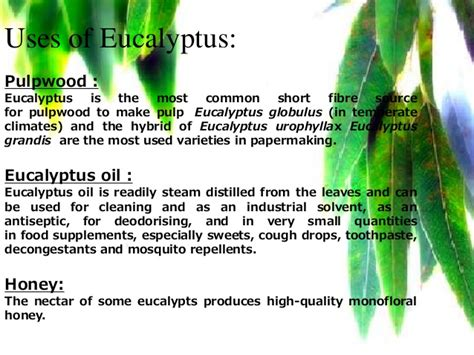 herbal oil picture 9