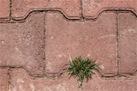 stop weeds growing between pavers picture 10