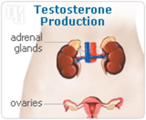 testosterone produced in ovaries picture 2