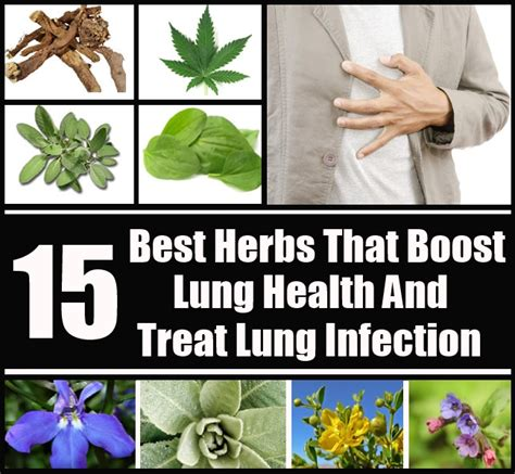 herbs for lung cancer picture 1