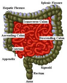 colonic effects of the skin picture 3