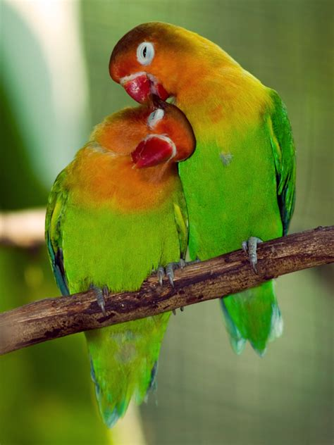 parakeet sleeping all the time picture 11
