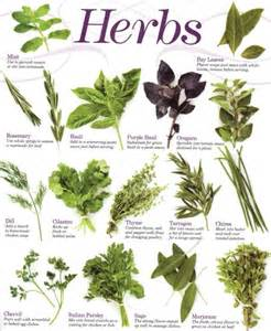 herbal groups picture 14