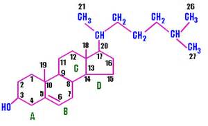Organic structure of cholesterol picture 2