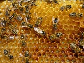 bee hives pictures picture 2