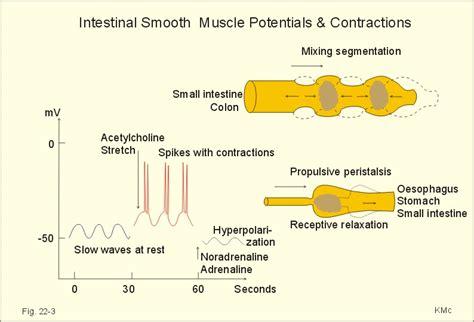 colon contractions picture 3