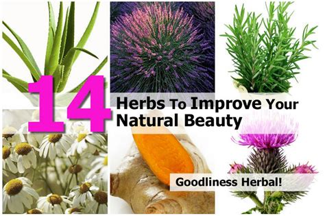 what supplements and natural herbs increase lubrication picture 3