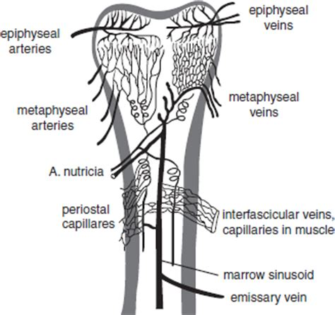 Blood flow of bony picture 7