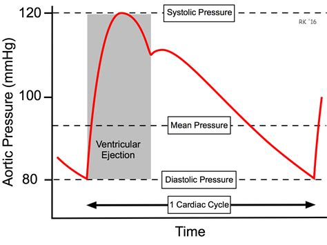 Arterial blood pressure picture 19