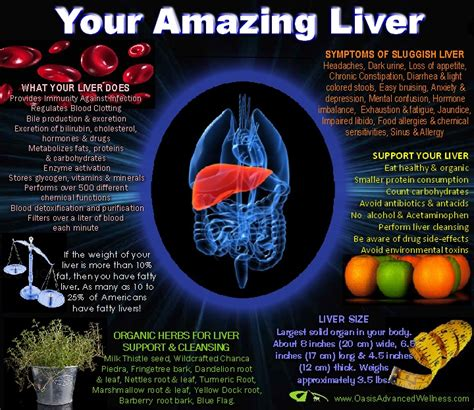 symptoms of fatigue, bruising, liver picture 13