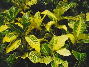 where to buy potted plants in metro manila picture 10