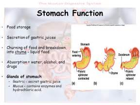 gastrointestinal function picture 1