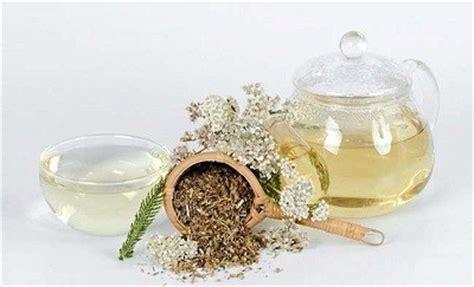 yarrow tea picture 11